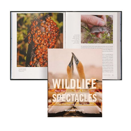 Wildlife Spectacles: Mass Migration, Mating Rituals, and Other Fascinating Animal Behaviors