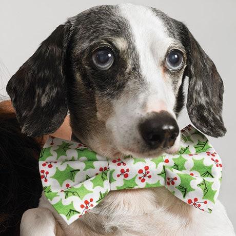 Doggy Bowtie Christmas Card