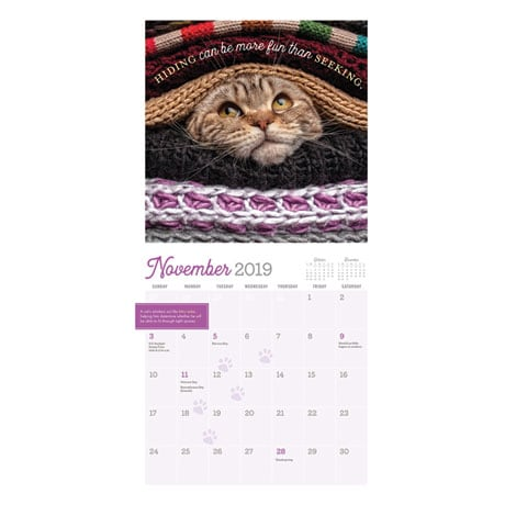 2019 Really Important Stuff My Cat Has Taught Me Calendar