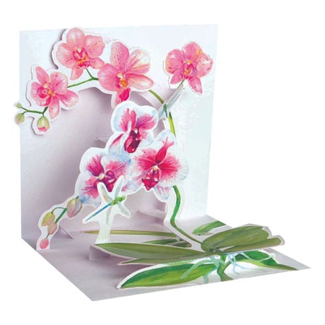 Pink Orchids Pop-Up Card