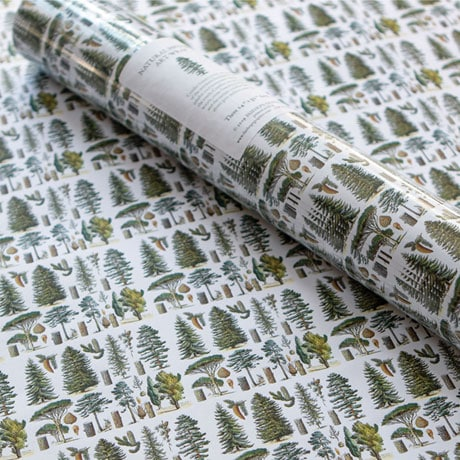 Natural History Gift Wrap: Conifers