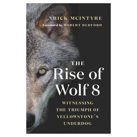 The Rise of Wolf 8