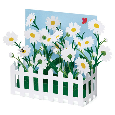 Picket Fence Daisies Pop-Up Cards