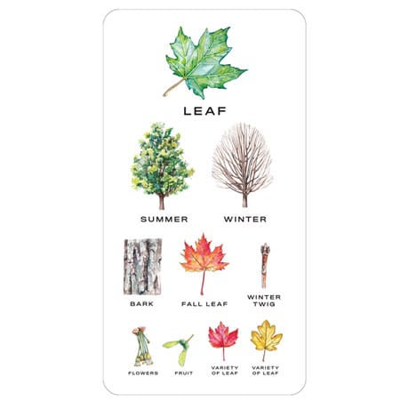Tree Vision: Know Your Trees in Thirty Cards
