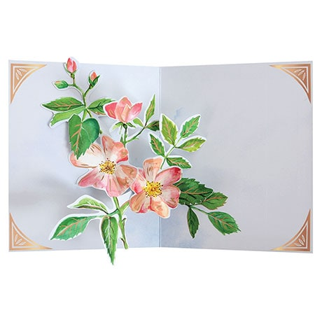 Seed Packet Pop-Up Card