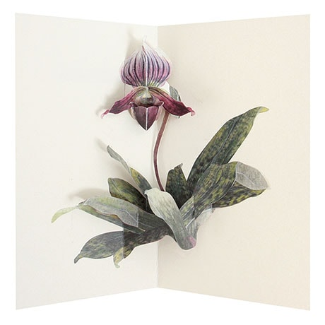 Takeda Floral Pop-Up Cards