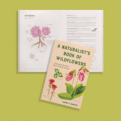A Naturalist's Book of Wildflowers