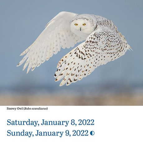 2022 Audubon Birds Page-a-Day® Calendar