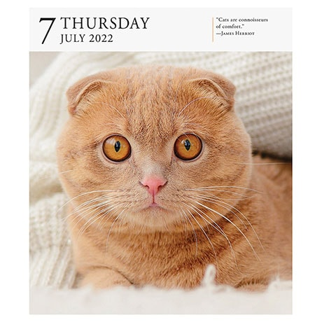 2022 Gallery Cat Calendar