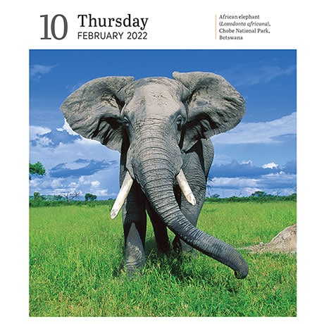 2022 Audubon Nature Calendar