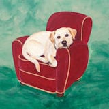 Rare Breed Coasters - Yellow Lab