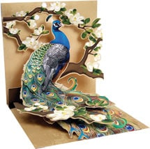 Peacock Pop-Up Mother's Day Card